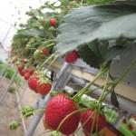 about_gardening_01