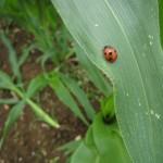 about_gardening_03