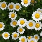 about_gardening_12