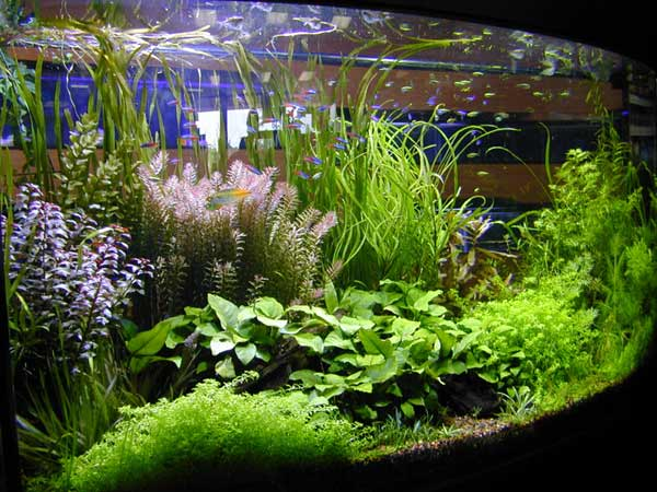 aquatic-plant-01