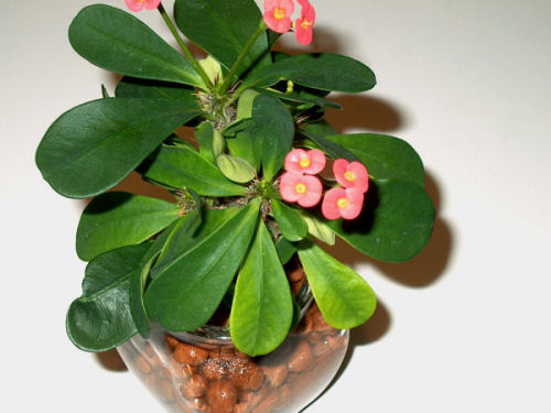 hydroculture-plant-04