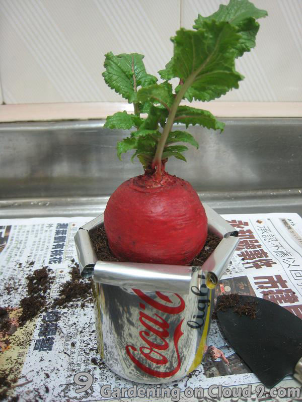 DIY Garden Container - Soda Can