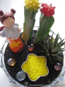 Tabletop Garden - My Star