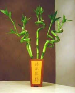 Twisted Bamboo