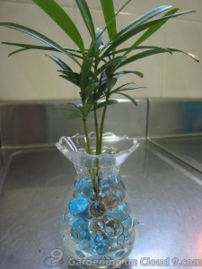 Potted Plant with Crystal Soil