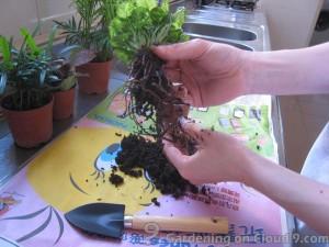 Hydroculture Potted Plants
