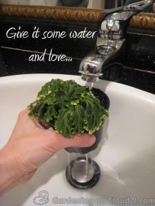 Indoor Gardening - Water Needs