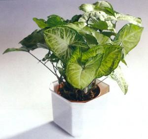 Indoor Houseplant