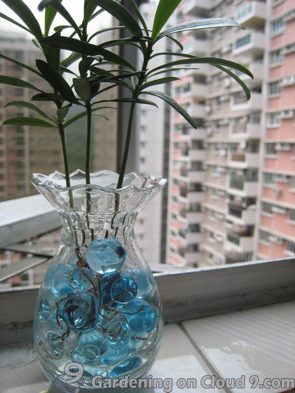 watering-crystal-soil-04