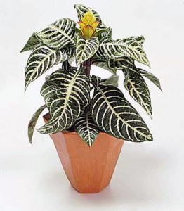 Indoor Houseplant