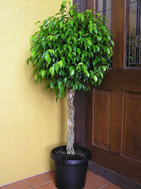 List of Suitable Houseplants with Photos for Indoor