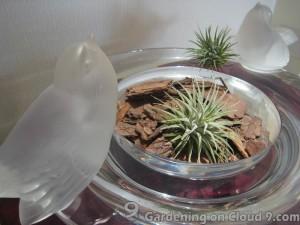 Tabletop Garden - I Love Air Plants