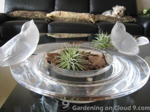 Tabletop Garden - I Love Air Plants