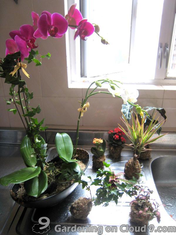 The Water Garden Shop - water plants and water garden supplies