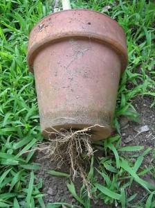 repot-plant-01