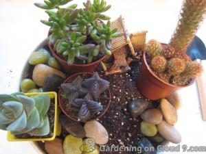 Tabletop Garden - Cactus Garden