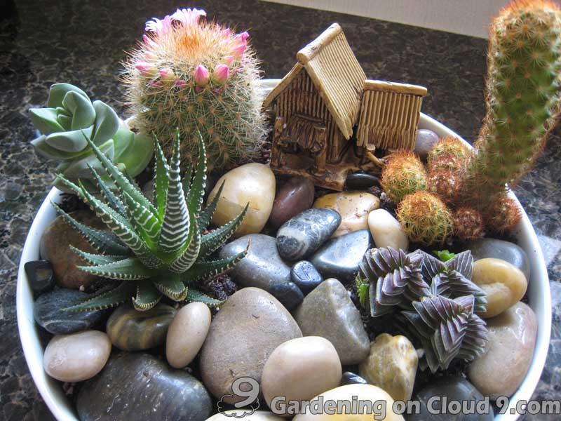 Attrayant Tabletop Garden   Cactus Garden Tabletop Garden   Cactus Garden
