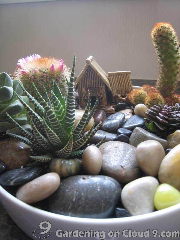 Tabletop garden cactus garden