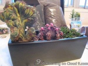 Tabletop Garden - In The Outer Space