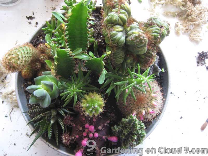 Tabletop Garden   Cactus Garden Tabletop Garden   Cactus Garden