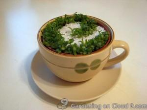 Tabletop Garden - A Green Cappuccino