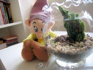 Tabletop Garden - Fishbowl of Cactus