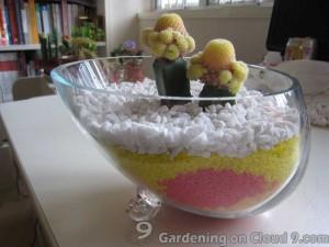 Tabletop Garden - Double the Love