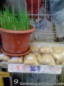 Garden Journal - Cat Grass Dactylis