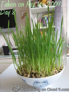 Garden Jouranl - Cat Grass Wheatgrass