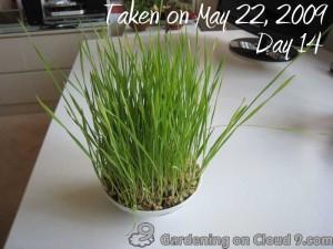 Garden Jouranl - Cat Grass Wheatgrass