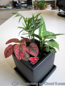 Tabletop Container Garden - Black N Matching