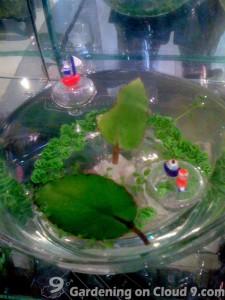 Miracle Leaf - Kalanchoe Pinnata