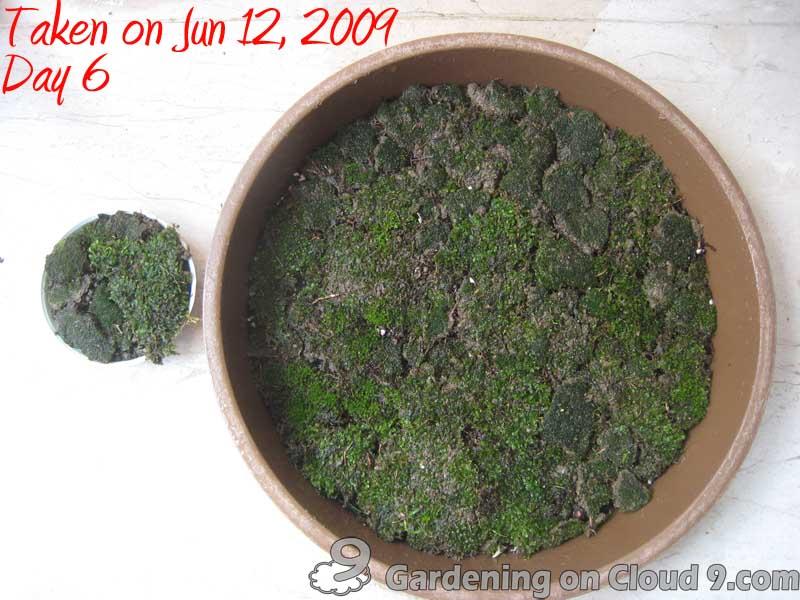 Growing Moss Growing Moss