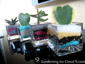 Tabletop Container Garden - A Shot of Succulent Please!