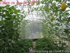 Hanging Melons in Greenhouse