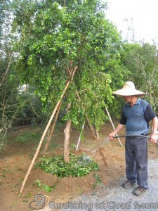 Transplanting a Tree