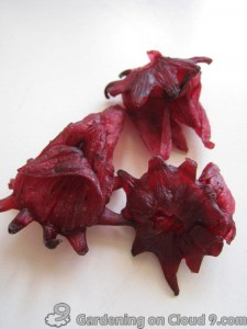 Dried-Hibiscus-Roselle