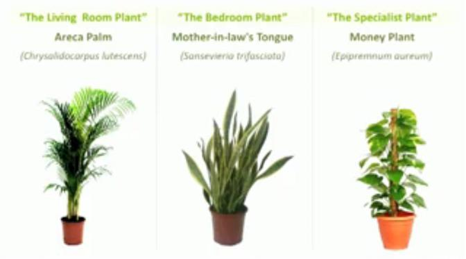 air-filtering-plants-01
