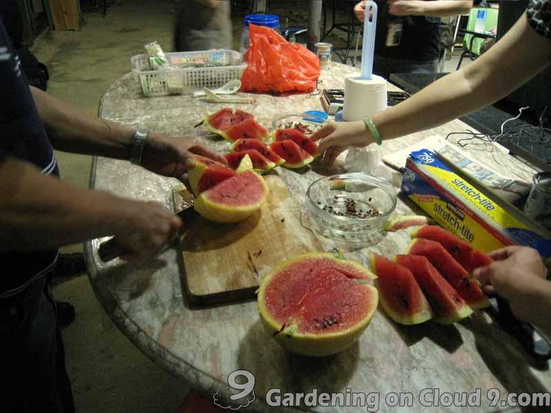 grow-watermelon
