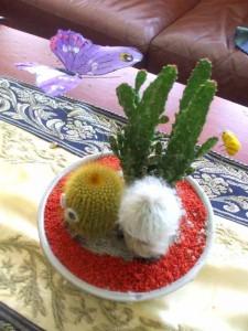 Attila's Cactus Garden